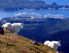 Ketchikan, Alaska - Great view!