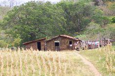 No meio do milharal, uma casinha de pau-a-pique.  http://www.portalanaroca.com.br/a-saudade-vem-e-aperta-e-so-nas-imagens-leva-a-gente-ao-passado-distante/