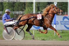 Swedish Coldblood Trotter Stallion Jarvsofaks Called
