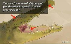 Life hack - escape a crocodile You know, just incase.