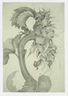 Sunflower I by Sarah Graham - graphite on paper 2008 166 x 116 cm
