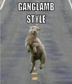 I admit, the song immediately cued in my head and the sheep choreography was instantly visualized.