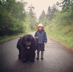 Just one of the 343824627865 reasons I love newfoundlands-They look like bears.