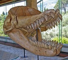Livyatan melvillei is an extinct species of physeteroid whale, similar in size to the modern sperm whale. It lived during the Serravallian stage of the Miocene epoch, approximately 13 to 12 million years ago. It was 13.5 to 17.5 metres (44–57 ft) long, the skull is 3 metres (10 ft) long.
