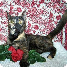 Williston Park, NY - Domestic Shorthair. Meet Fiona a Cat for Adoption.