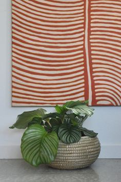 Urban Jungle Bloggers | Plants & Art. This plant in a basket was a perfect fit with the contemporary aboriginal art | Styled Canvas
