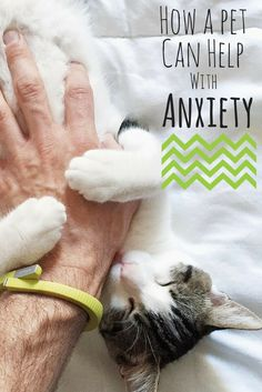Anxiety can be the worst. For people with anxiety disorders or even those who just get anxious a lot, there's often no way around it, but there are some ways to manage it. Everyone has their own coping mechanisms that work for them (and not every method works for every person), but sometimes, having a pet can help to curb anxiety.