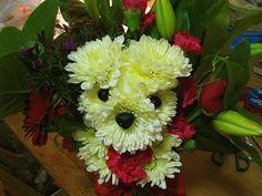 dog bloom 5