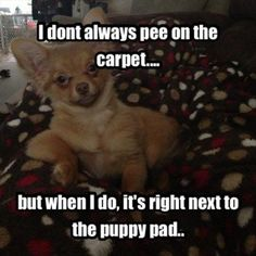 Oh yes definitely! Mine go on the kitchen floor next to the pad. #chihuahuadaily…