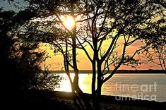 Tree Silhouette At Sunset by Judy Palkimas Tree Silhouette, Fine Art America, Digital Art, Wall Art, Sunset, Artwork, Outdoor, Outdoors, Work Of Art