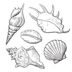 Buy Set of Various Mollusk Sea Shells by Sabelskaya on GraphicRiver. Set of various beautiful mollusk sea shells, sketch style illustration isolated on white background. Realistic hand d. Seashell Tattoos, Seashell Drawings, Beachy Tattoos, Seahorse Drawing, Ocean Drawing, Tattoo Drawings, Art Drawings, Sommer Tattoo, Realistic Sketch