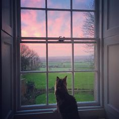 """""""Good morning, 2016 #thehatchseend #view #instamood #instacats #instaview #countryhouses"""""""