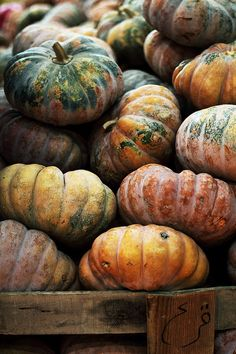 Fall Pumpkin Harvest