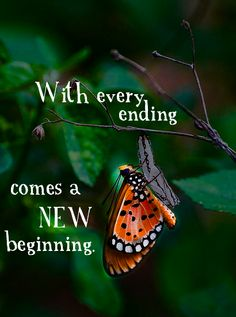 The beauty of life. Ends mean new beginnings One Door Closes Quotes, When One Door Closes, Done Quotes, Quotes To Live By, Photography For Dummies, Moving Forward Quotes, Words Worth, Best Vibrators, New Chapter