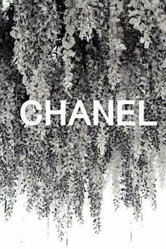 black&white picture/print with white font (Chanel Campaign) Black And White Picture Wall, Black And White Pictures, Black White, Bedroom Wall Collage, Photo Wall Collage, Boujee Aesthetic, Aesthetic Pictures, Aesthetic Vintage, Black And White Aesthetic
