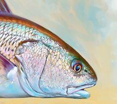 48 Best Redfish Art Images Goldfish Red Fish Fish Art