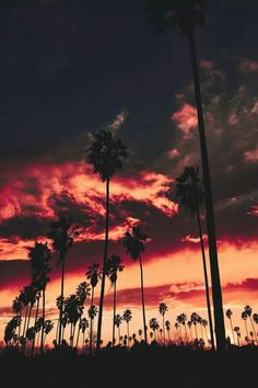 Superb Nature - motivationsforlife: Echo Park, Los Angeles by. Echo Park, Beautiful Sunset, Beautiful World, Beautiful Places, Beautiful Couple, Cute Wallpapers, Wallpaper Backgrounds, Sunset Wallpaper, Iphone Backgrounds