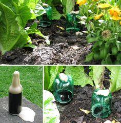 Plastic Bottle Snail and Slug Beer Trap