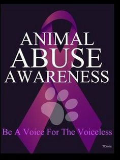 Animal abuse awareness - be a voice for the voiceless. The month of April is Prevention of animal cruelty. Stop Animal Cruelty, Animal Testing, Animal Rescue, Animal Shelter, Animal Adoption, Shelter Dogs, Racing Extinction, Save Animals, Animales