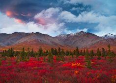 Denali National Park, Alaska...too beautiful for words!