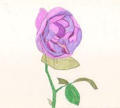 本日の一枚。2017/10/25紫の秋バラ。