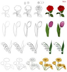 Floral study by Precia-T on DeviantArt Easy Flower Drawings, Flower Art Drawing, Flower Drawing Tutorials, Flower Sketches, Floral Drawing, Easy Drawings, Art Tutorials, Painting & Drawing, Tulip Painting