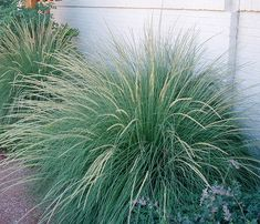 WaterWise Landscapes Inc. (Plants page 3) deer muhly