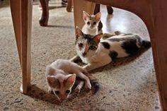 Sem Título (Temporariamente): Que gatos   Cats