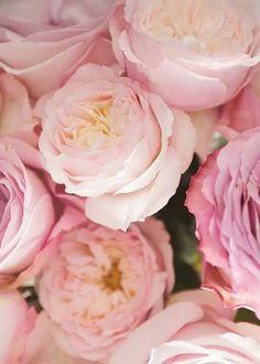 Bonitas flores!!!
