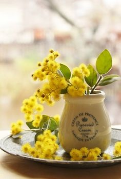 Mimosa is seen everywhere in Provence Mimosas, Flower Power, Le Mimosa, Yellow Cottage, Deco Floral, Art Floral, Shades Of Yellow, Colour Yellow, Mellow Yellow