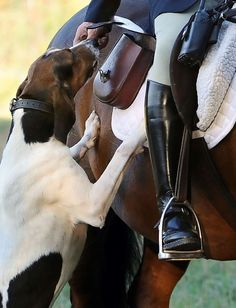In this Wednesday, Oct. 8, 2014 photo, hunt master William T. Stuart, of Fairfield County Hounds, fe... - AP Photo/Jessica Hill