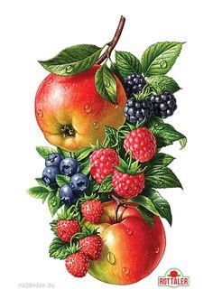 Love this style of illustrations of fruit - Иллюстрации для линейки соков ROTTALER. by INORAMA illustrators, via Behance