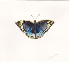 Original Peacock Butterfly Watercolor Painting by TrebleThreads, $18.00