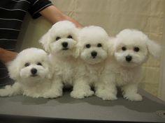 quartet of fur babies