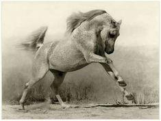 Horse                                                                                                                                                                                 Más