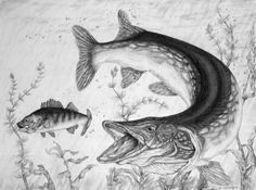 fish sketch images | Water Leopard - Northern Pike Fish Drawing - Fish Art