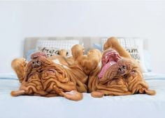 The Upside Of Dogs - Adorable Photo Series Shows Man's Best Friend From A Different Angle