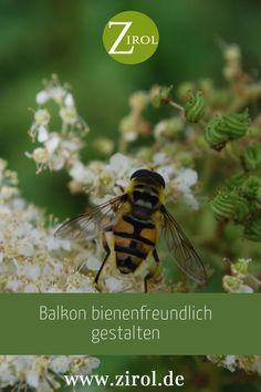 Schmetterlinge, Bienen und andere Insekten haben immer weniger Lebensraum. Aber selbst mit einem Balkon, einer Terrasse oder einem Innenhof können Sie etwas gegen das Artensterben tun. Bienenfreundliche Balkonpflanzen leisten einen wichtigen Beitrag zur Arterhaltung, dabei erleben Sie das wunderbare Naturschauspiel auf dem Balkon oder im eigenen Garten. Insects, Animals, Patio, Petunias, Animales, Animaux, Animal, Animais