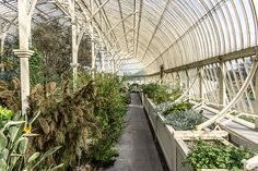 Botanic Gardens In Glasnevin (Dublin) [The Streets Of Ireland]