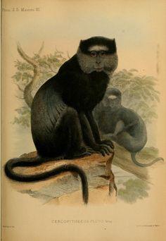 v.1 (1848-1860) [Plates:Mammalia] - Proceedings of the Zoological Society of London. - Biodiversity Heritage Library
