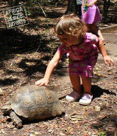 Etelä-Afrikan kiertomatkalla Turtle, Road Trip, Africa, Animals, Turtles, Animales, Animaux, Tortoise, Road Trips
