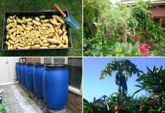 Convertir un pequeño jardín en huerta urbana y producir 250 kilos de comida en 60 metros cuadrados