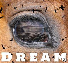Dream, Grafikdesign, Wandbild, Geschenkidee,Plakat Web Banner, Flyer, Grafik Design, Portrait, Movie Posters, Inspiration, Art, Wall Prints, Poster