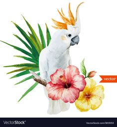 Find Parrot Hibiscus Flowers Tropical Watercolor stock images in HD and millions of other royalty-free stock photos, illustrations and vectors in the Shutterstock collection. Thousands of new, high-quality pictures added every day. Tropical Birds, Tropical Flowers, Hibiscus Flowers, Watercolor Animals, Watercolor Flowers, Palm Tree Flowers, Palm Trees, White Flowers, Flower Vector Art