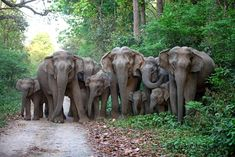 It is at a very high cost that India maintains wild elephants but they love elephants so much that I think they will continue to do so.  found on IndianNatureWatch. net