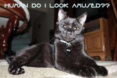 Human do I look amused?