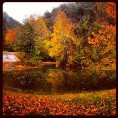#northcarolina #autumn