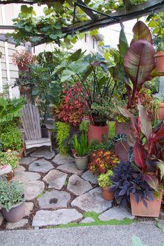 Gardening In Containers | Gardening In Containers