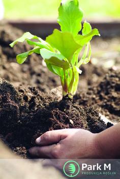 Optymalne warunki rozwoju roślin