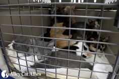 Reward offered:  Cats and kittens found abandoned in a crate on the side of the road on the morning of August 31.